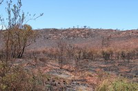 What caused the fire? | Destroyed by fire landscape.