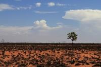 Dry landscape after fire