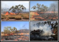 Bushfires, wildfire   Bushfires are comonly in Western Australia of every Australian summer. They can start suddenly, move quickly and affect large areas. We saw wildfire near east of Karijini National Park and feel wildfire near Leeuwin-Naturaliste National Park.