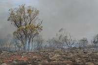 Bushfire | Near Karijini national park