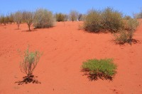 Red sand near Mimilia