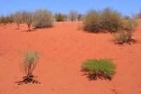 Red sand near Mimilia