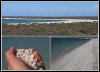 Shell Beach | It consists of small white shells clams stacked on each other at a height of about 10 meters. Crossings are small clams size of about 14 mm, inhabit warm and salty coastal waters. It is reported that on the beach you will find up to 4,000 individuals per square meter. The beach is empty of people and washed by the very shallow waters of the Indian Ocean. Still 300 meters from the water reaches up to the knees.