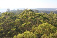 View from the treetops
