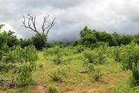 Coming rain | National park Chobe