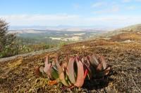 Porongurung national park   View to Stirling Range