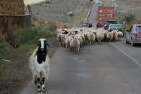 Armenia 2014 PREPARING